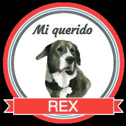 Mi querido Rex