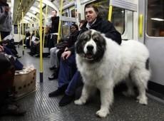 perro-metro.min