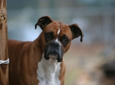 boxer.min