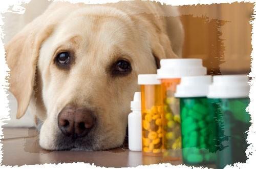 perro-enfermo6-min