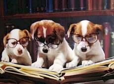 perros leyendo